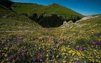La fioritura delle orchidee dei Sibillini sui Piani di Ragnolo
