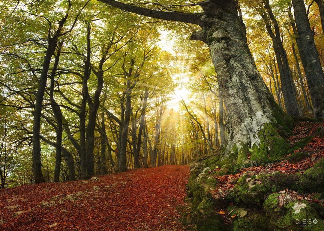 Foto di Diego Buccolini - Autunno a Sarnano - Foliage nella faggeta di Sassotetto