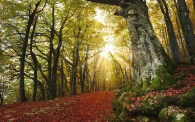 Itinerari d'autunno a Sarnano: i luoghi del foliage
